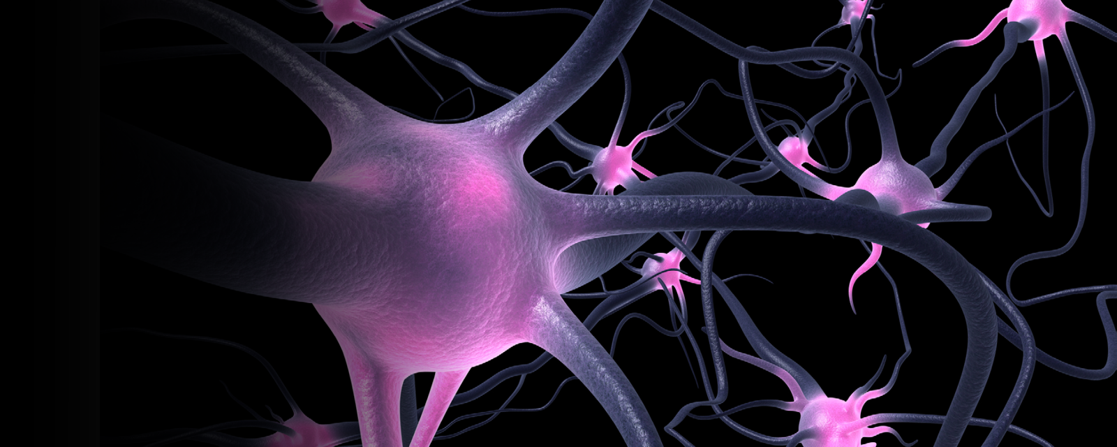 Neural Control and Autonomic Regulation-Banner